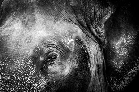 Close Up Elephant Eye Stock Photo