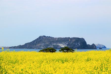 Shijiazhuang, Shijiazhuang, Rapeseed flowers, sea, spring, Foto de archivo
