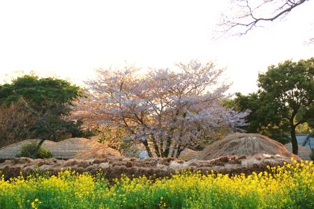 It is a folk village of Jeju city. Stock Photo
