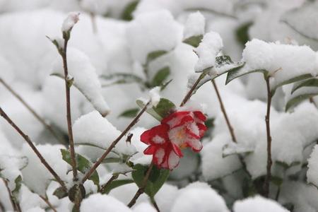 It is the winter scenery of Jeju.