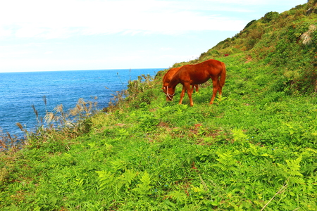 A landscape where horses graze on the coast of Jeju. Stock Photo