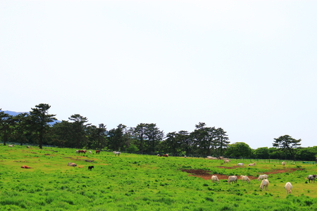 It is beautiful scenery of Jeju horse ranch Redakční
