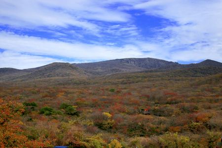 It is the autumn scenery of Jeju 1100 highland wetland Foto de archivo