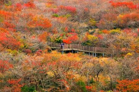 It is the autumn scenery of Jeju 1100 highland wetland Stock Photo