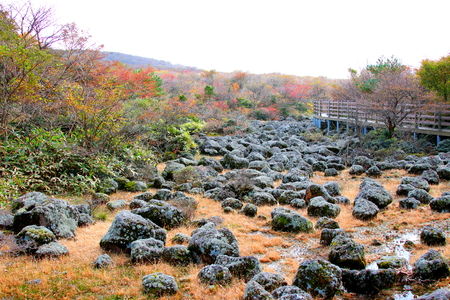 Jeju 1100 It is scenery of Koji wetland.
