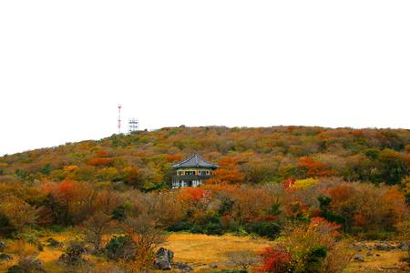 Jeju 1100 It is scenery of Koji wetland.