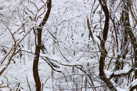 It's a beautiful snow scene Stock fotó