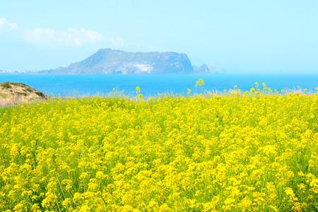 """Het is het lentelandschap van de toeristische plek """"Seopjikoji"""" in Seogwipo op het eiland Jeju."""