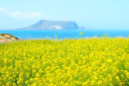 "It is spring scenery of tourist spot ""Seopjikoji"" in Seogwipo of Jeju Island."