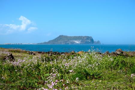 It is spring scenery of tourist spot Seopjikoji in Seogwipo of Jeju Island.
