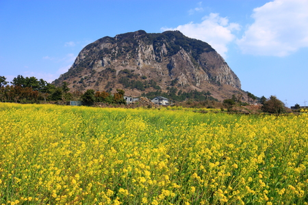 It is spring scenery of Sanbangsan in Jeju.