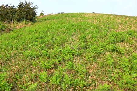 It is the spring landscape of Munseok-san mountain in Jeju Island. Reklamní fotografie