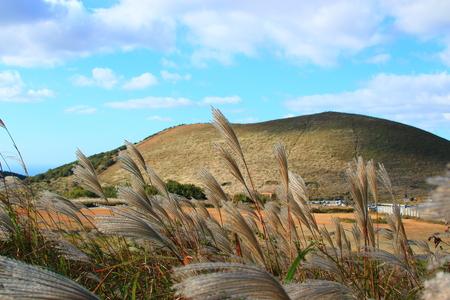 It is a beautiful rural scenery of Jeju. Фото со стока