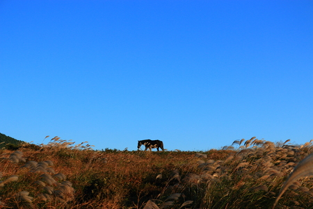 It is a beautiful rural scenery of Jeju. Stock Photo
