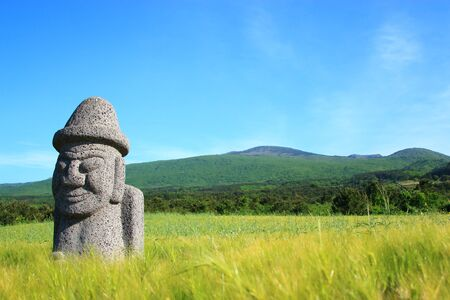 This is a barley field in Jeju.