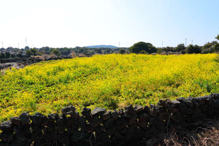 beautiful spring landscape in the rural villages of Jeju. Stock fotó