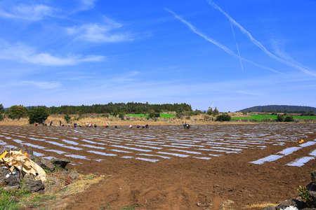 beautiful spring landscape in the rural villages of Jeju. Foto de archivo