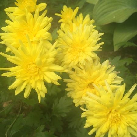 5 黄色の花 写真素材 - 63650467