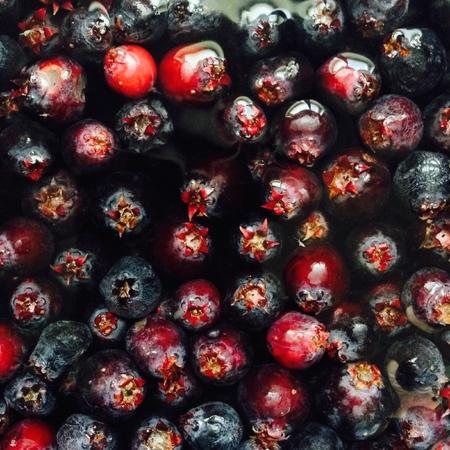 Saskatoon Berry Group 版權商用圖片
