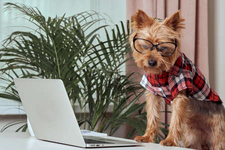 Beautiful cute dog in big glasses for eyesight. The concept of a successful entrepreneur.