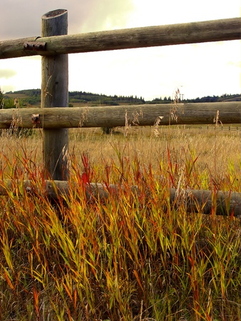 Warm colors of autumn prairie grass along a wooden fence