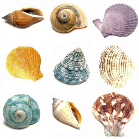 Group of nine colorful seashells on a white background