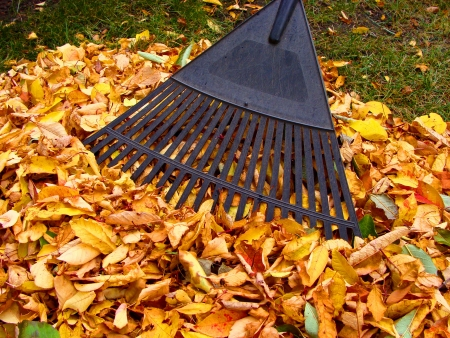 Rake in a pile of colorful autumn leaves photo