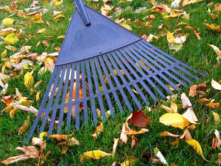 Raking fall leaves photo