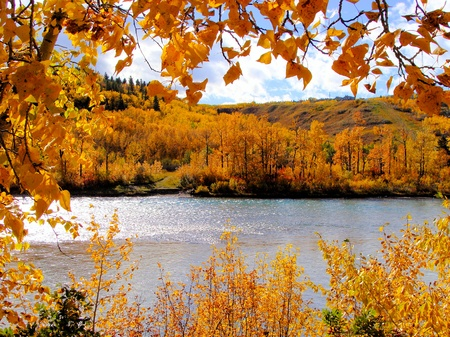 changing color: Colorful fall foliage framing a autumn scene along the river, Calgary, Canada