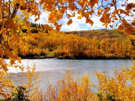 arbol alamo: Follaje de oto�o colorido enmarcando una escena oto�o junto al r�o, Calgary, Canad�