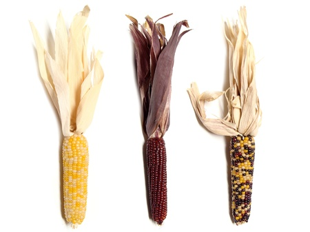 dry food: Three thanksgiving corn husks on a white background Stock Photo