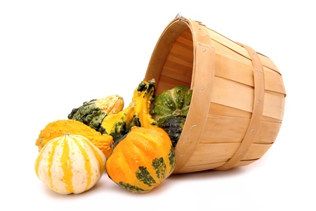 gourds: Harvest pail of spilling autumn gourds
