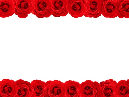Red rose double edged border or frame over white Фото со стока