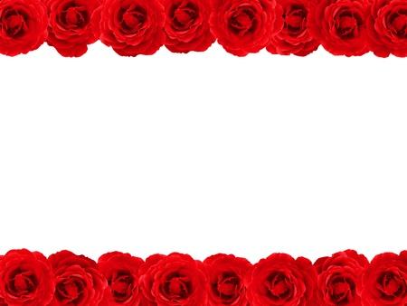 Rose rouge à double tranchant frontière ou un cadre sur fond blanc Banque d'images - 11808490