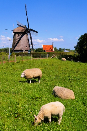 Sheep grazing in the Dutch countryside with traditional windmill in background Stock Photo - 14332552