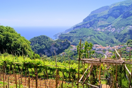sorrento: Vineyards among the hills along the Amalfi Coast, at Ravello, Italy