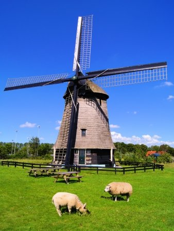holland windmill: Sheep grazing in the Dutch countryside with windmill Stock Photo