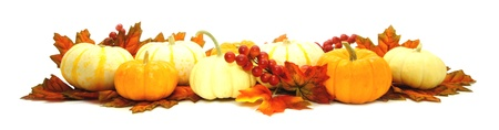 Group of colorful mini pumpkins with autumn leaves forming a long edge or border
