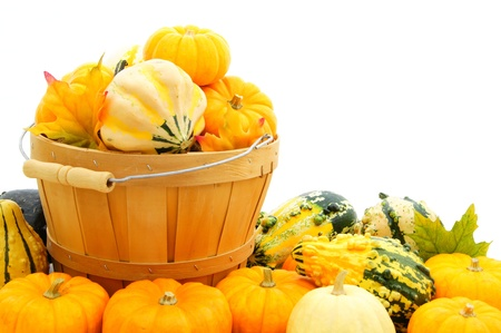Harvest pail filled and surrounded by autumn pumpkins and gourds photo