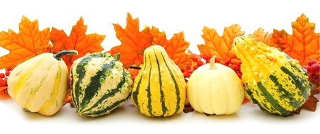 gourds: Border or edge of gourds with vibrant autumn leaves over white