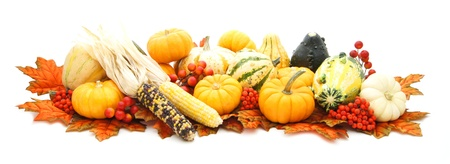 Arrangement of many autumn gourds, pumpkins, corn and red leaves