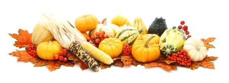 Disposizione di molti zucche autunno, zucche, mais e foglie rosse