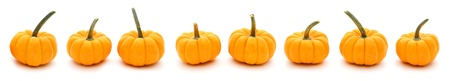 pumpkin border: Autumn border of pumpkins in a row with white background