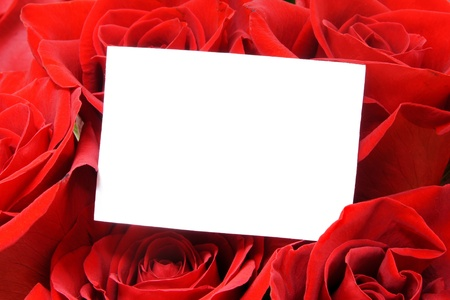 room for text: Blank card with room for text among beautiful red roses Stock Photo