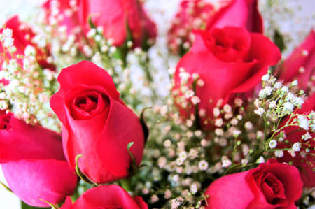 babys: Close up of a bouquet of pink roses with Baby s Breath Stock Photo