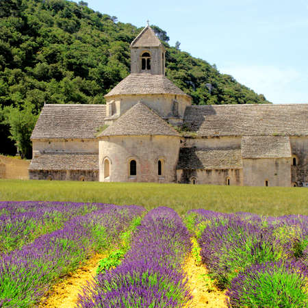 french countryside: Iconic Senanque Abbey in Provence, France with lavender flowers