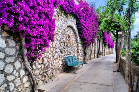 bougainvillea flowers: Vibrant flower draped pathway in Capri, Italy Stock Photo