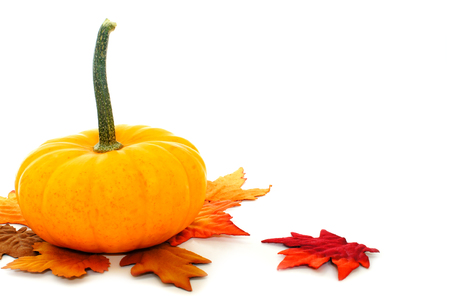 scattered on white background: Single pumpkin with scattered leaves on a white background
