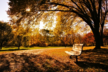 Bench in a park in late day autumn light photo