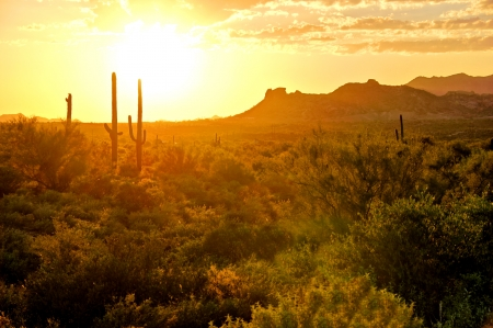 superstitions: Sunset view of the Arizona desert with cacti and mountains